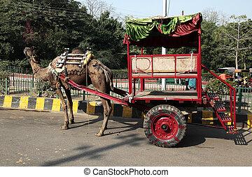 taxi, camello, agra