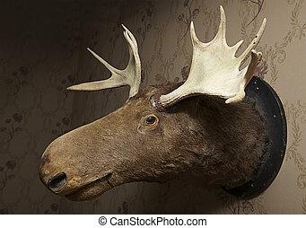 Taxidermy moose head on wallpaper in a livingroom