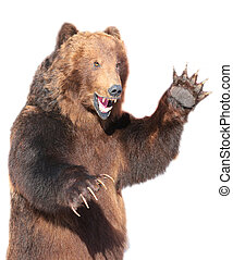 Taxidermy of a Kamchatka brown bear on white