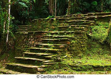 tayrona., steen, perdida, oud, gebouwde, noordelijk, mensen, dit, toonaangevend, archeologische plaats, ciudad, terras, kerstman, marta, afsluiten, trap, colombia.