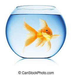 tazón de fuente de los pescados, arriba, aislado, cierre, ...