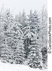 tcheco, floresta, república, inverno