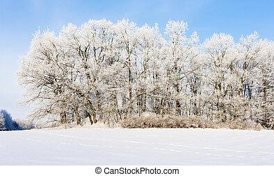tcheco, paisagem, república, inverno