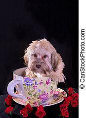 Tea Cup Bolonka with roses