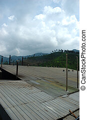 tea factory roof