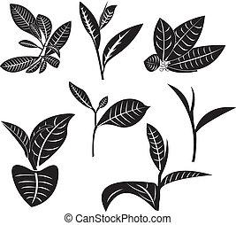 Tea Leaf - Tea leaf in vector graphics