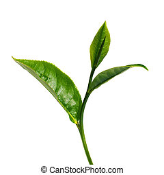 Green tea leaf isolated over white background.
