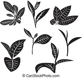 Tea Leaf - Tea leaf in vector graphics