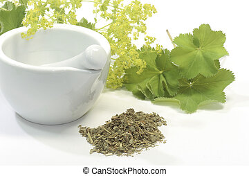Herbal tea with ladys mantle and mortar on white background
