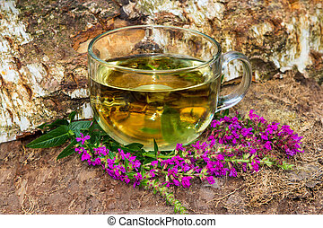 Tea or infusion of lythrum salicaria or purple loosestrife....