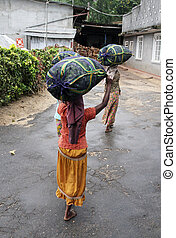 Tea picker - Two tea picker women are going to the factory ...