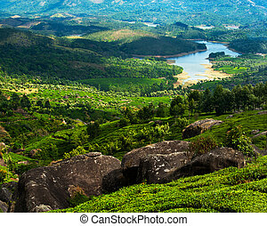 Tea plantation landscape panorama with river at sunny day