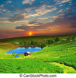 Tea plantation on central highland in Vietnam.