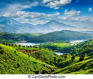 Tea plantations and river in hills - Tea plantations and...