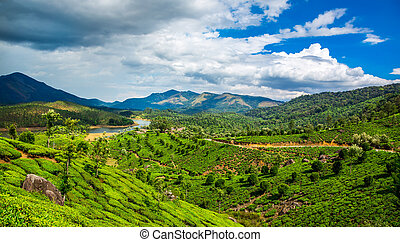 Tea plantations in India - Landscape of the tea plantations...
