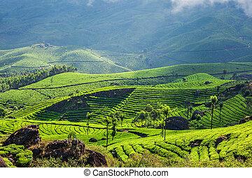 Tea plantations in Kerala, India - Kerala India travel...