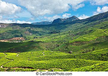 Tea plantations. Munnar, Kerala, India