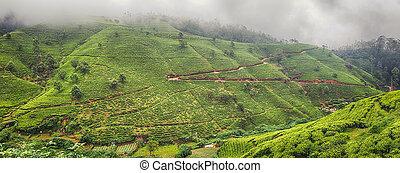 Tea plantations. Sri Lanka. Panorama - Tea plantations near...