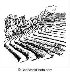 Tea Plantations - vector illustration