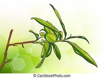 tea tree on the background