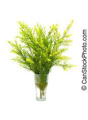 Tea tree Plantation (Melaleuca bracteata cv. Revolution...