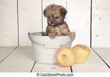 Teacup Yorkshire Terrier in Calendar Setting - Adorable ...