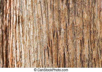 teak, écorce, arbre, texture