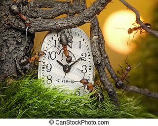 team of ants adjusting time on clock, fantasy