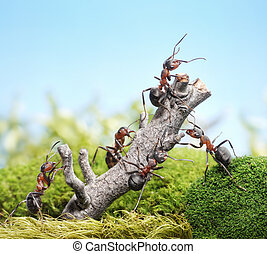 team of ants and weathered tree, teamwork concept - team of...