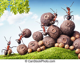team of ants collecting seeds in stock, teamwork