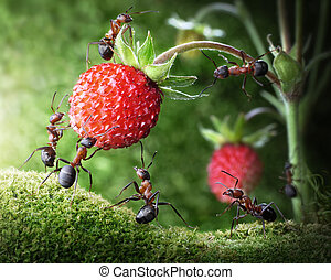 team of ants picking wild strawberry, agriculture teamwork...