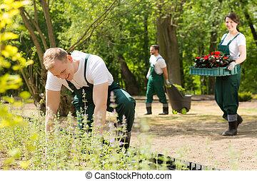 Team of gardeners planting flowers