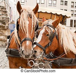 Team of horse - Harnessed light chestnut horse on the street...