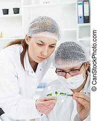 Team of scientists in a laboratory working on chemical testing.