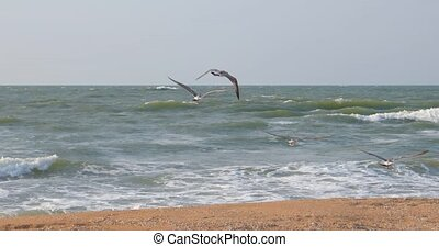 Team of sea gulls fly away - Team of seagulls fly away over...