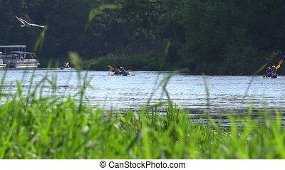 Team of sports pair kayaks racing on wild water river through reeds.