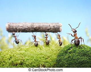 teamwotk, dirección, hormigas