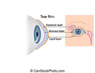 Tears chemical composition, eps10 - The lacrimal gland,...