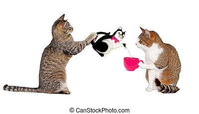 Teatime for kitty cats - Portrait of two cats facing each...
