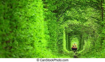 technical train in the tunnel from deciduous - Summer. Dense...
