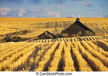 techo, de, un, granja, en, wheaten, campos