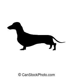 teckel, silhouette, chien