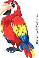 tecken, röd, papegoja
