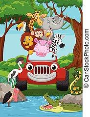 tecknad film, wild djur, ridande, a, röd bil, in, den, djungel