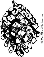teckning, fir-cone