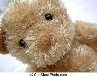 Cute and cuddly teddy bear