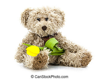 Teddy bear toy clutching a single tulip in its arms for an...