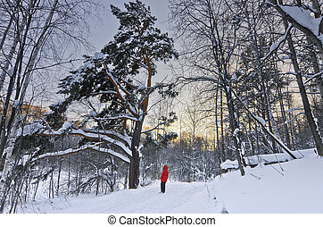 Teen girl admires an old pine tree in winter forest at sunset