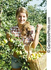 Teen girl picking pears