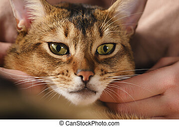 Teen girl with sad abyssinian cat on knees sitting on couch